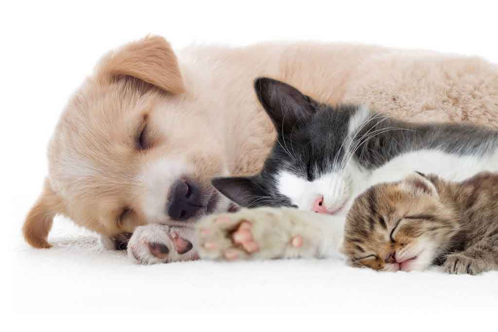 family-pets-cat-dog-kit-pup1024